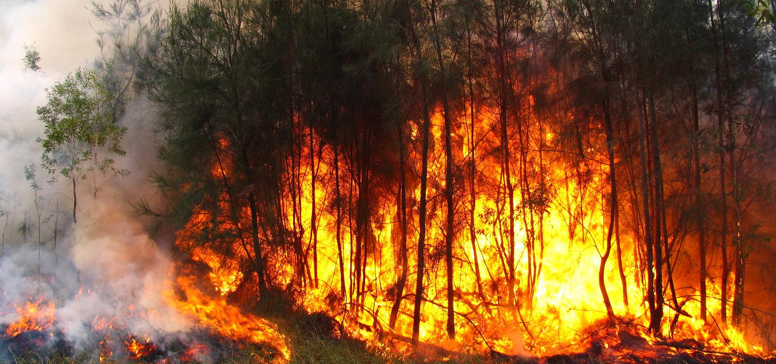 Ministério Público de Contas ingressa com representações contra prefeituras do AM por insuficiência de política de prevenção e combate a queimadas